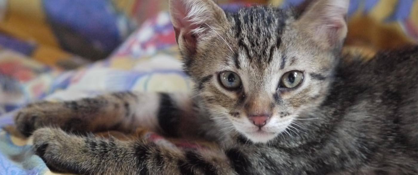 El diseñador de Chanel deja su fortuna a su gata. ¿Pueden las mascotas heredar en España?